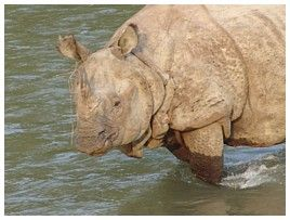 Click for large picture of rhino