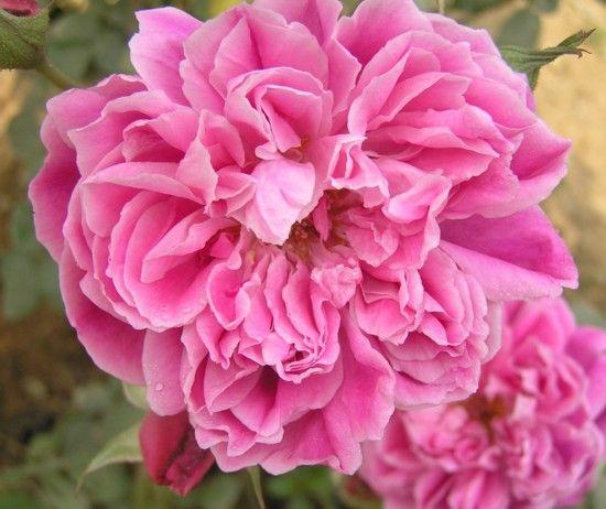 Flowers Xxx 68