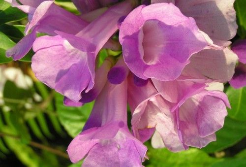 Flowers Xxx 49
